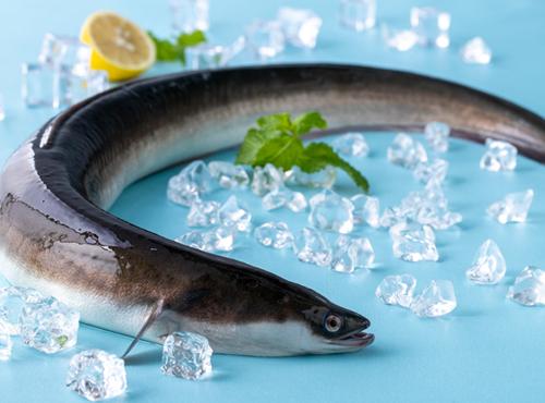 莆田: 鰻魚節!